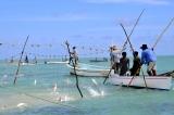 ile rodrigues-1er- mars- fête-du poisson-ouverture-la-peche-la-senne